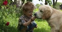 Olek i jego pies