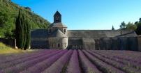 Lawendowy klasztor
