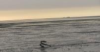 Boso przez Morze Północne