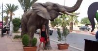 W objęciach słonia.