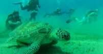 Żółw na podwodnej łące