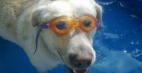 Dafi w basenie