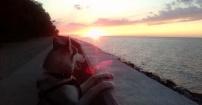 Siberian husky i zachód słońca