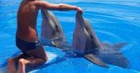 Wesołe delfinki