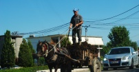 Albański rolnik