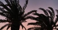 Palmy w Orebiciu