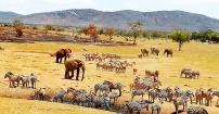 Safari - esencja Afryki