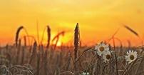 Harvest time... ;-)