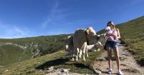 Alpejska Milka