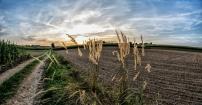 Polska wieś o zachodzie słońca